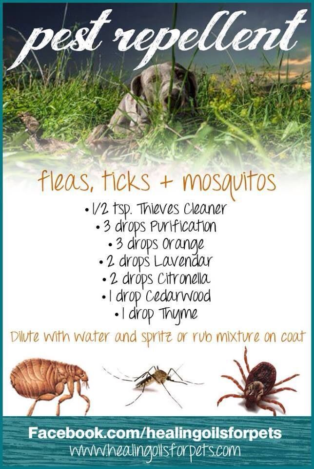 Fleas ticks or mosquitos wonderful world of ylo young living essential oils pinterest - Home remedies to keep fleas away ...