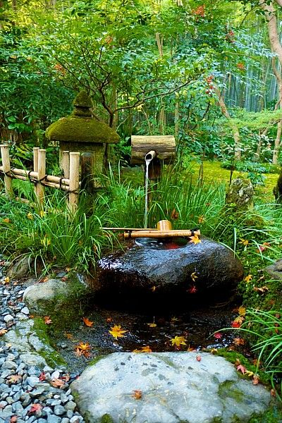 Gio-ji Temple Kyoto. the real japan, japan, garden, park, japan, landscape, japanese, public, travel, tour, explore, flower, plant, tree, pond, lake, pool, bonsai, gardening, garden design, layout, planting http://www.therealjapan.com/subscribe/