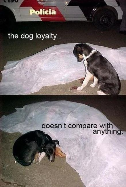 awwwww.: Picture, Animals, Best Friends, Dogs, Pet, Mans Best Friend, Loyalty, So Sad