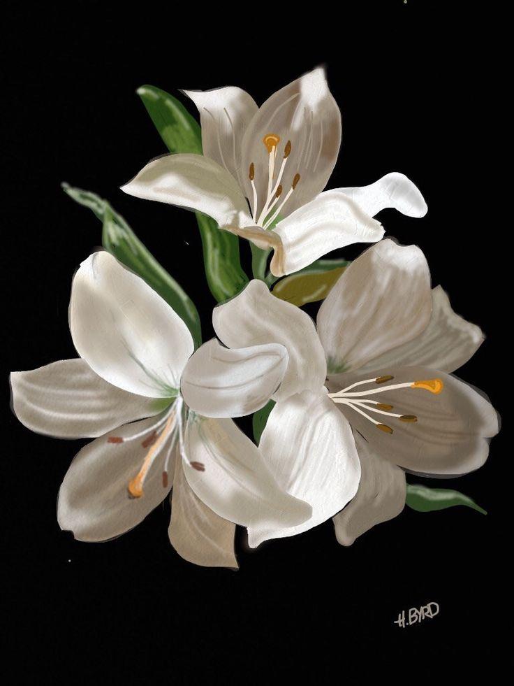 https://flic.kr/p/tyhADY | image | White Lilies