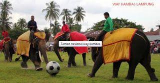 Pesona Gajah Way Kambas Lampung