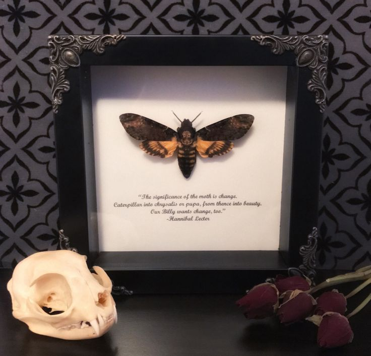 RESERVED FOR PETER*** Custom Hannibal Lecter Deaths Head Moth Shadow Box, Taxidermy, Real Butterfly, Framed Butterfly, by beyondthedarkveil on Etsy https://www.etsy.com/ca/listing/496857444/reserved-for-peter-custom-hannibal