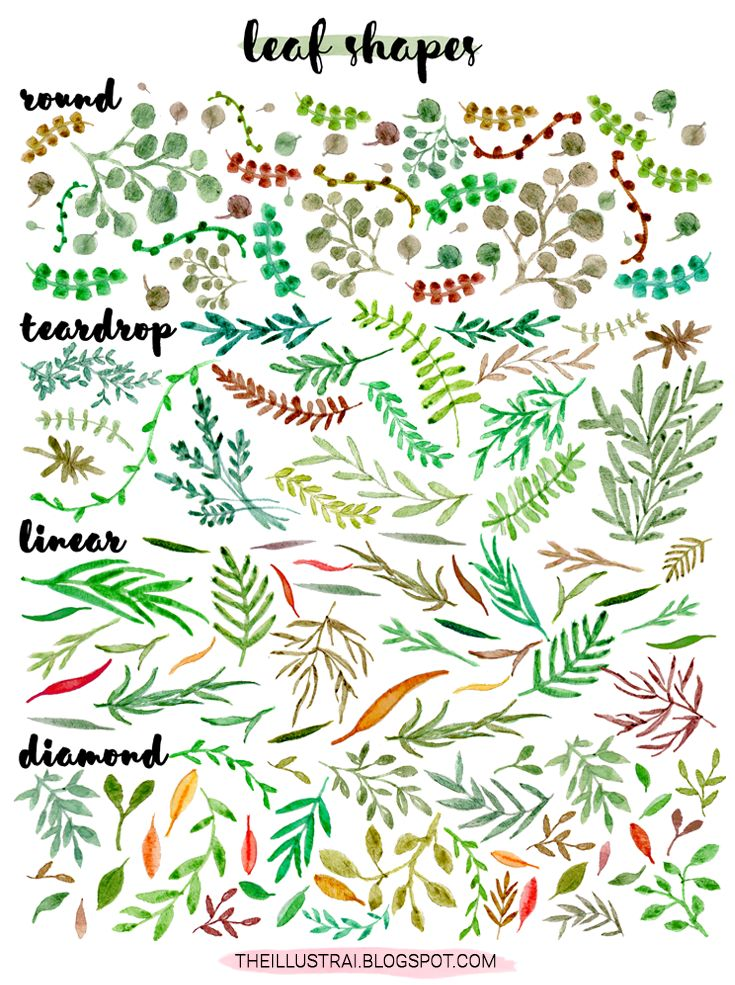 If you like drawing plants and flowers as much as I do, then you probably find yourself getting in a rut and drawing the exact same styles over and over again. As a result, I have created this reference so that you can switch up the leaf styles in your artwork. Click through to the post for part two of my guide to drawing leaves series!