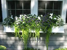 Bildergebnis für Balkonpflanzen hängend
