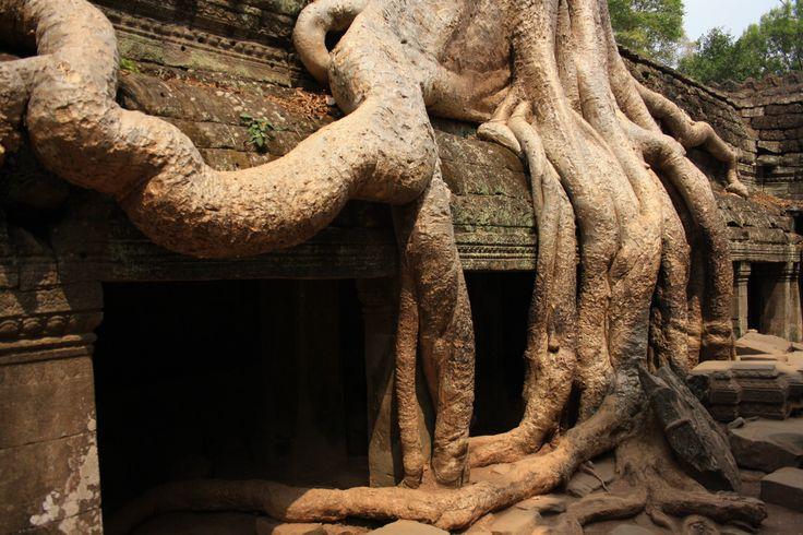 Ta Prohm em Angkor, Siem Reap