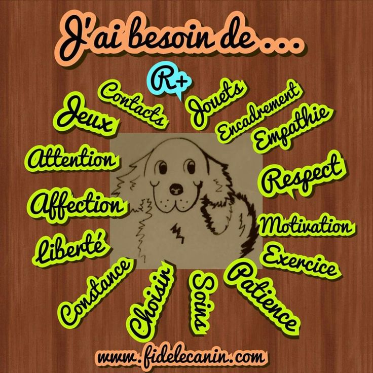 Image - - education canine, conseil en comportement,... - Skyrock.com