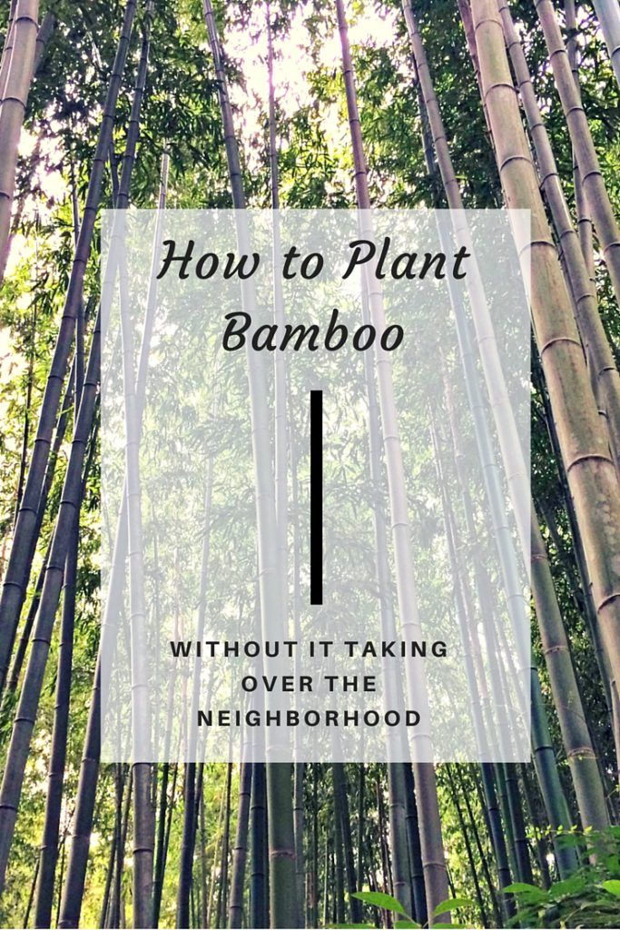 Bamboo has bad reputation for spreading far and wide, making it difficult to keep in check. With these handy tips, you can tame bamboo before it gets out of control, and create a serene backdrop for your garden. - www.thehandymansdaughter.com