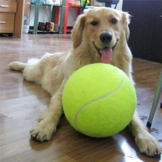 Giant Tennis Ball Tennis Balls For Dogs Giant Dogs Dog Toys