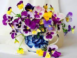 violets - Google Search