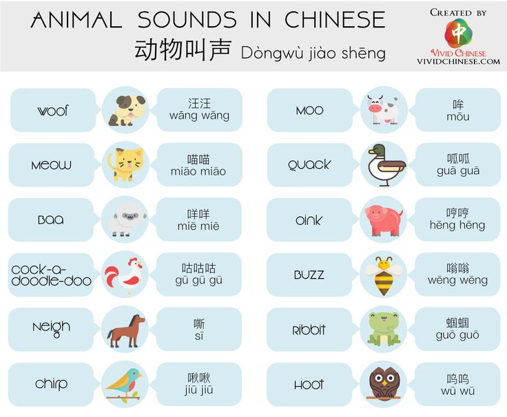 13++ Animals that make noise ideas