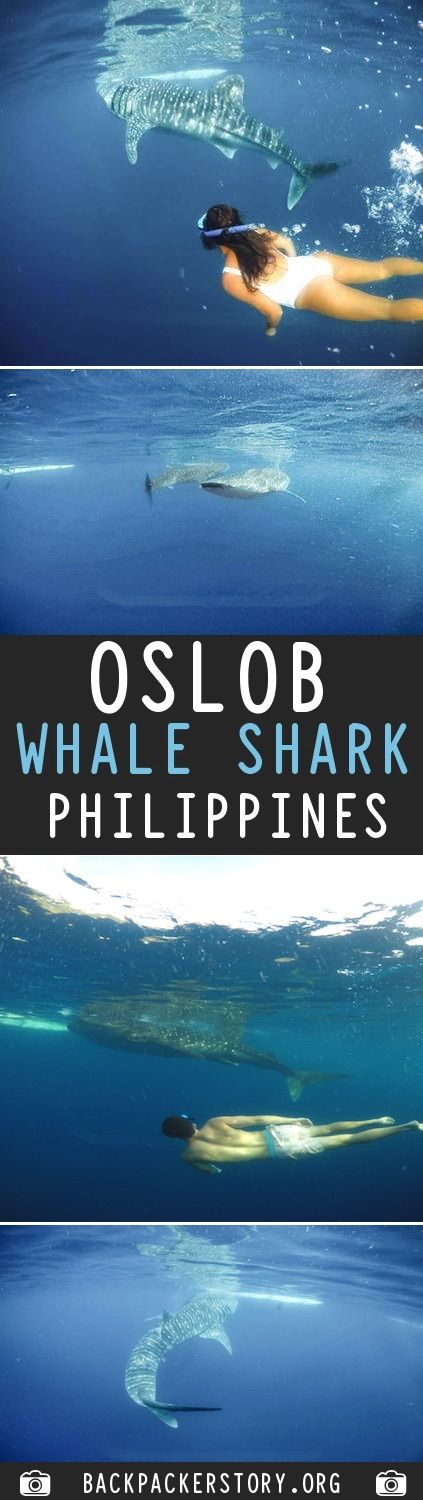 Oslob Whale Sharks Guide