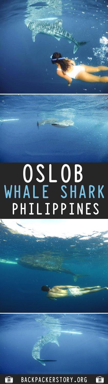 Oslob Whale Sharks Guide
