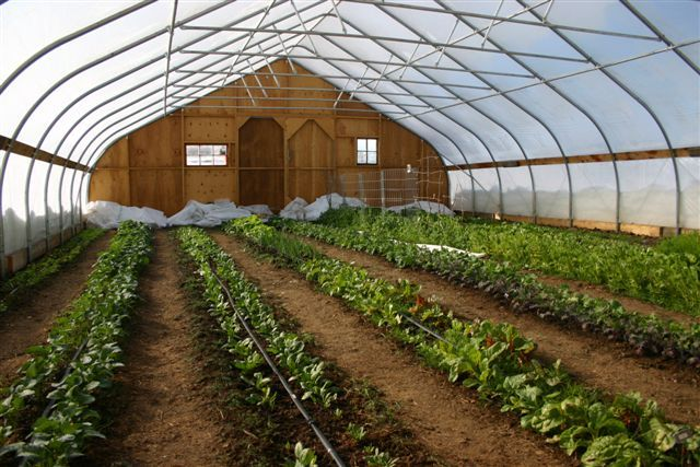 Painted Sage Farm in Cora, WY uses a Rimol Greenhouse Systems High Tunnel to grow fruits and vegetables