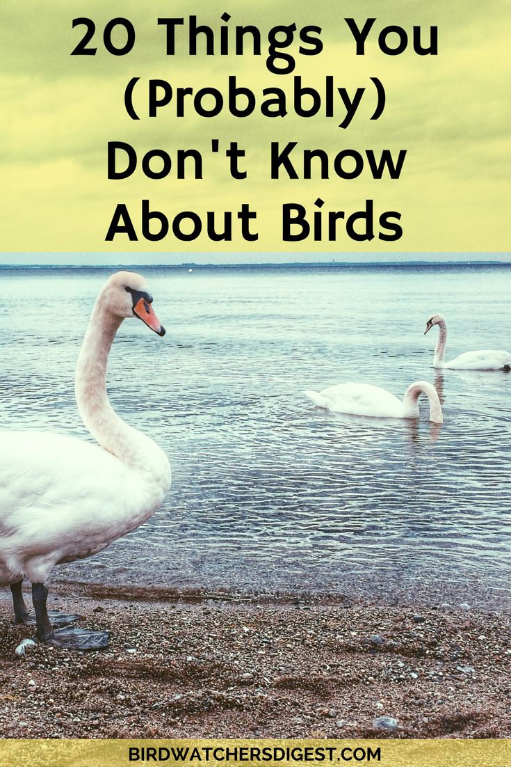 70 best bird identification u0026 facts images on pinterest backyard