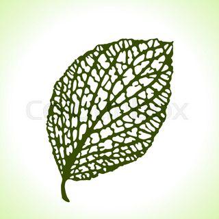 Decorative leaf isolated. Natural detailed macro illustration