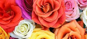 Rose Spectacular. Hunter Valley Gardens 11th October - 16th November 2014