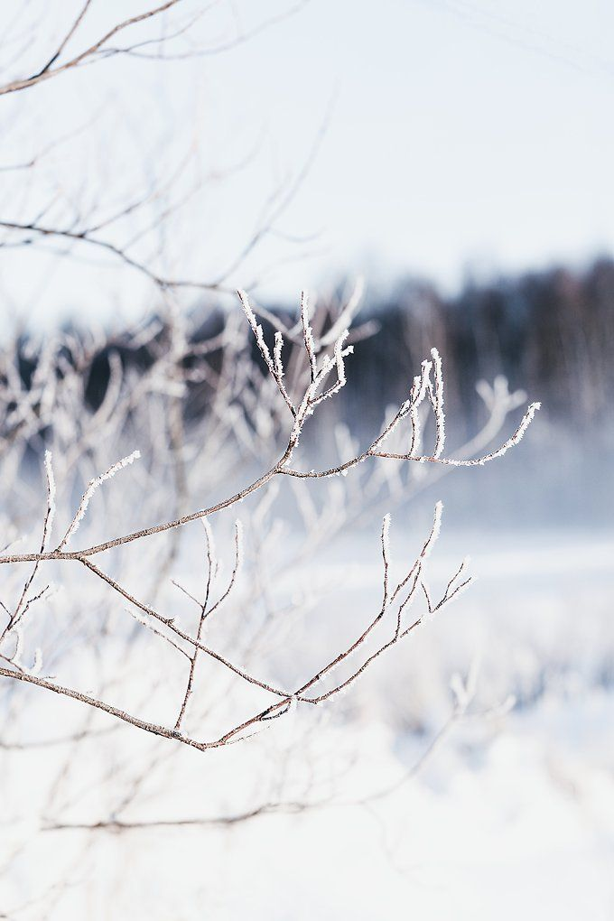 Fine Art Photograph/ Winter by Hannele Hyyppä on  @creativemarket