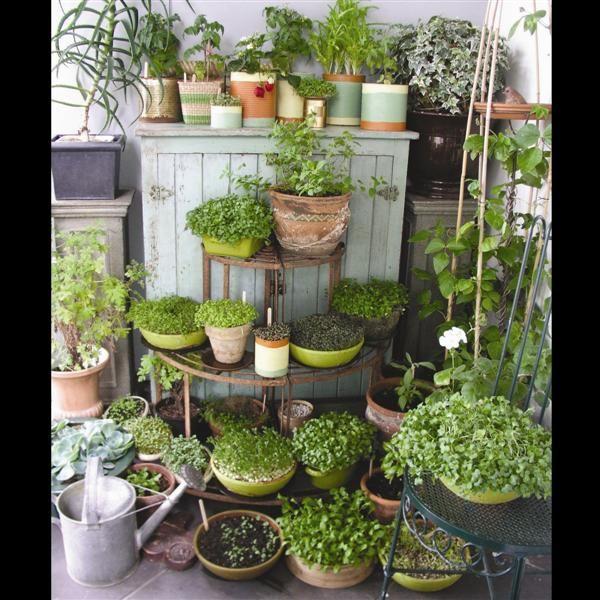 Microgreens garden nutrients at your fingertips for Indoor gardening nutrients