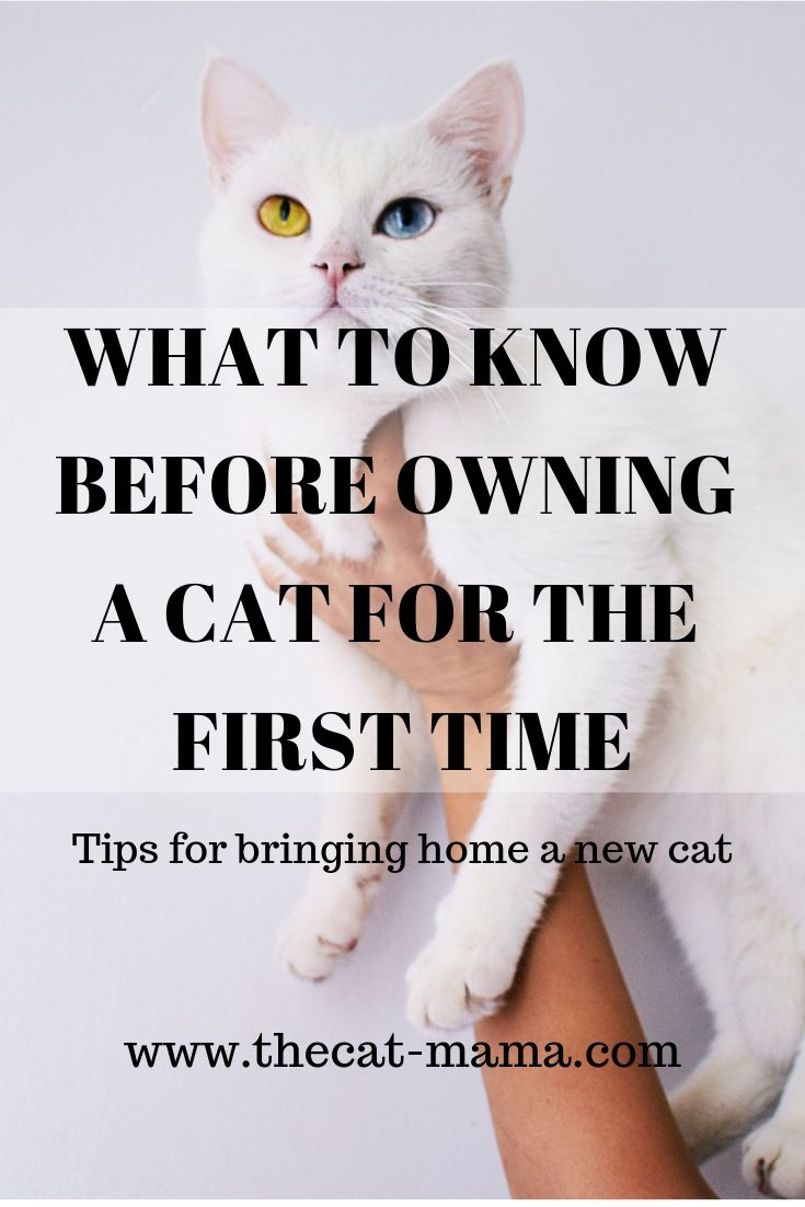 What To Know Before Owning A Cat For The First Time First Time Cat Owner First Time Cat Owner Owning A Cat Cat Owners