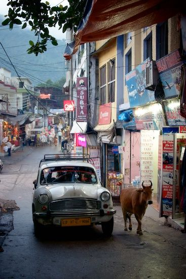 Road shared by a cow and an Ambassdor car, Rishikesh. Nothing unusual about this.