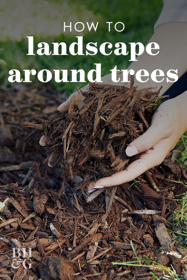 3 Easy Ways To Dress Up Trees In Your Landscape Landscaping Around Trees Mulch Around Trees Wood Chips Landscaping