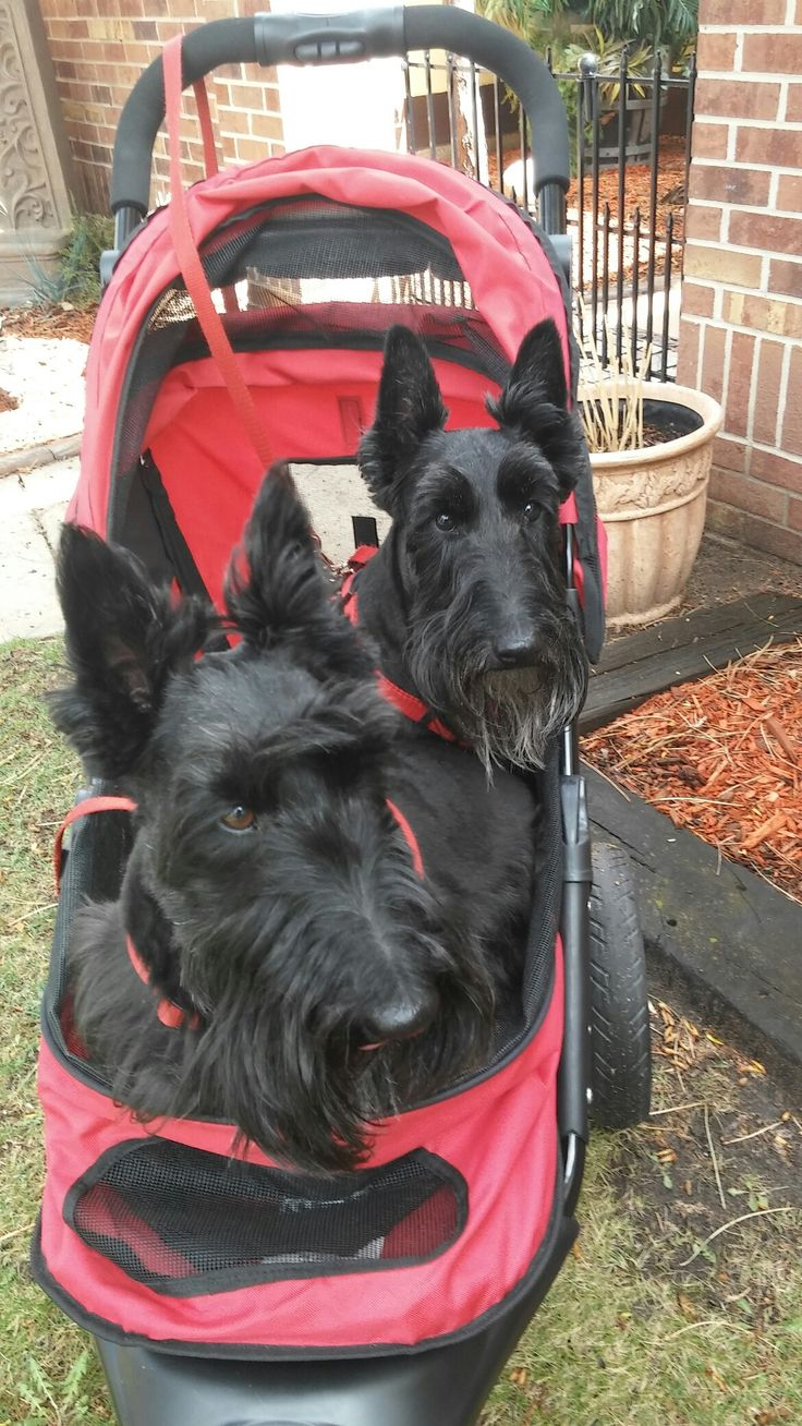 We love to ride in our stroller!   Apr. 21, 2016