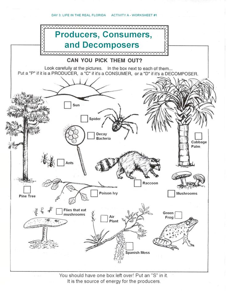 Decomposers Producers Consumers Food Chains Worksheets