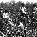 Field slaves spent the majority of their life working hard. Crops grown on plantations such as tobacco, rice, sugar and cotton were maintained and laboredField slaves spent the majority of their life working hard. Crops grown on plantations such as tobacco, rice, sugar and cotton were maintained and labored by slaves. Early own plantation owners realized it was cheaper to use slave workers than to hire workers for wages. The whole purpose of the Atlantic slave trade was to..  The post 6…