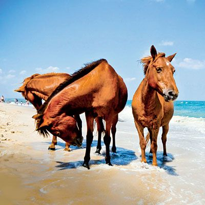 America's Best Beaches: South Ocean Beach, Assateague Island, Maryland. South Ocean is a throwback to the Atlantic coast of long ago—wild, windy, and ripe for exploration. Coastalliving.com
