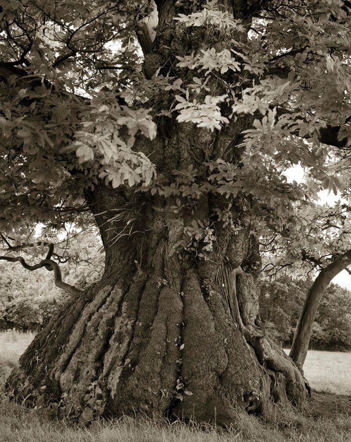 Фотограф снимала самые старые деревья мира в течение 14 лет. Величественность этих гигантов завораживает...