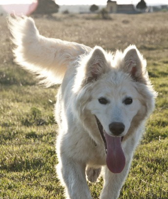 Finally a list of hypoallergenic running dogs, all found in one place!