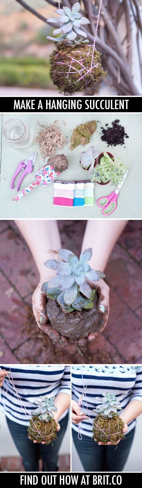 They like hanging out*. | 32 Reasons Succulents Are The Best Plants Ever