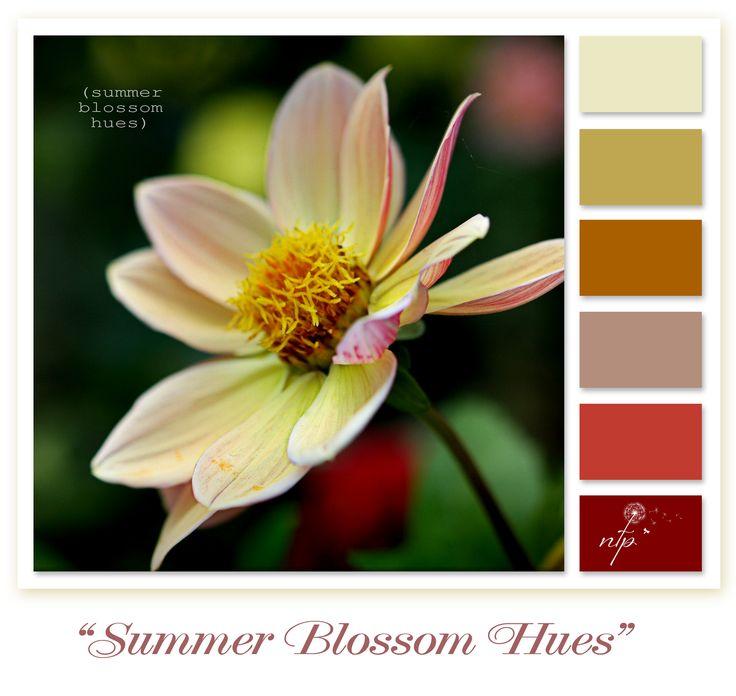 Summer Blossom Hues Laurel Bank Park, Toowoomba, Queensland - Australia