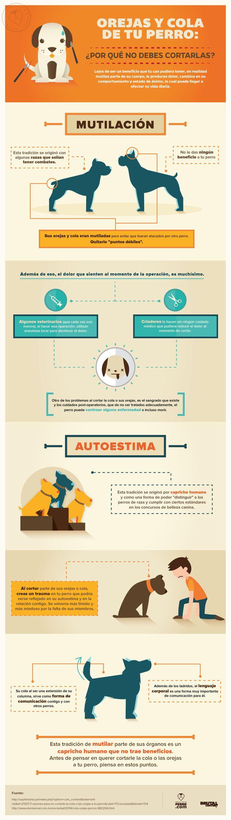 Infografía: Por qué no debes cortar las orejas ni la cola de tu perro - Instituto Perro