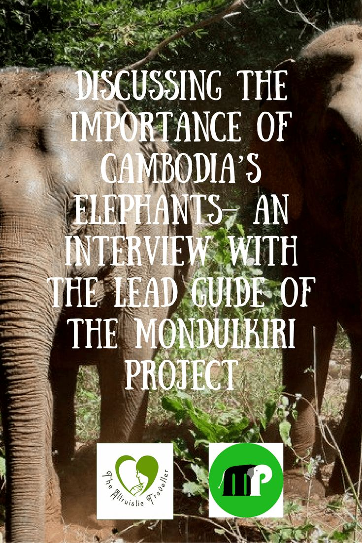 An interview with Mr Tree, the lead guide at the Mondulkiri Project - protecting and caring for Cambodia's Elephants in Mondulkiri.