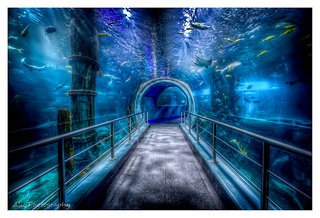 Melbourne Aquarium, walk through tunnel. #Australia.