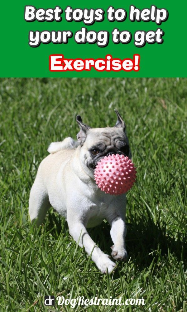 Indoor Dog Exercise Toys Dog Toys Dog Illnesses Interactive