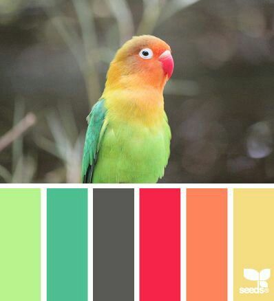 feathered hues Color Palette - Paint Inspiration- Paint Colors- Paint  Palette- Color- Design Inspiration--Disregard the color palate and look at  the ...