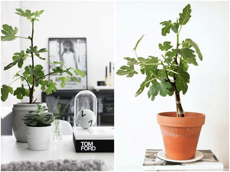 photo plant2_zpsa2nuktdf.jpg