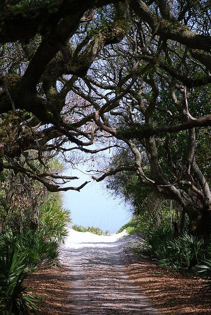 After a 10 minute walk through this  path,  beach appears and is isolated, intimately romantic and has large sand dunes with beautiful shells :: cumberland island, GA