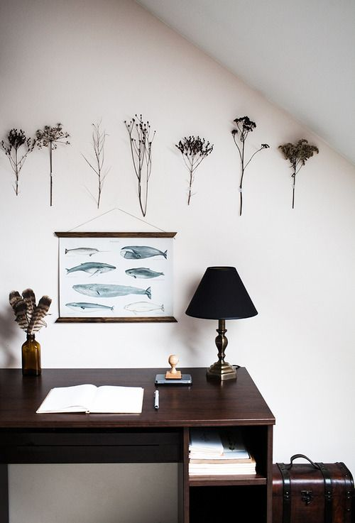 Dried plants and whale illustrations