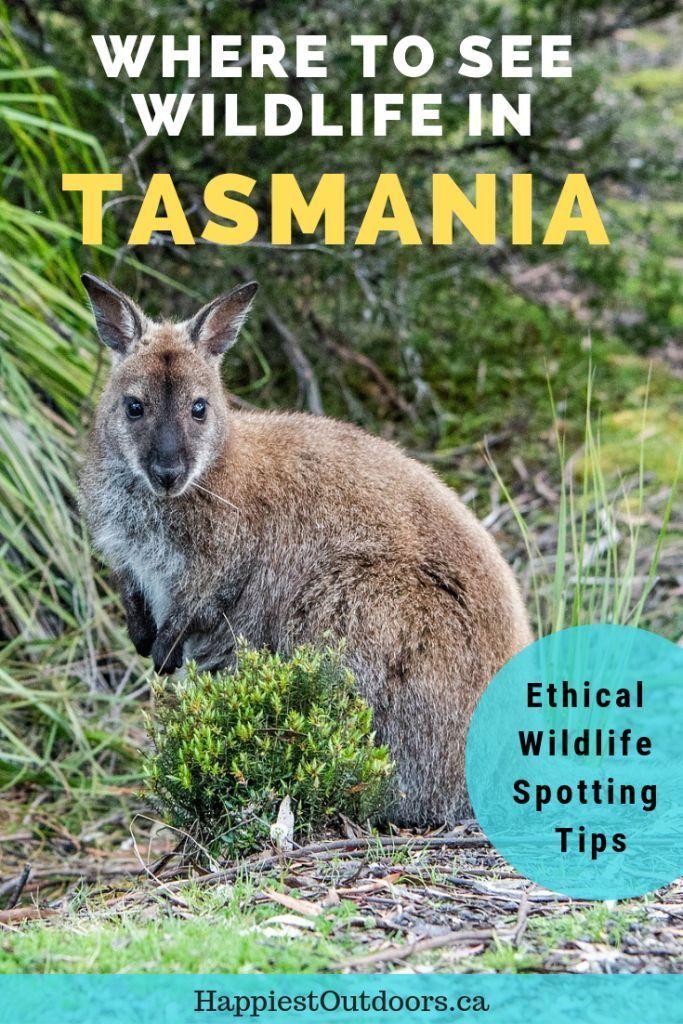 Best Places To See Wildlife In Tasmania Happiest Outdoors Tasmania Australia Backpacking Wildlife Travel