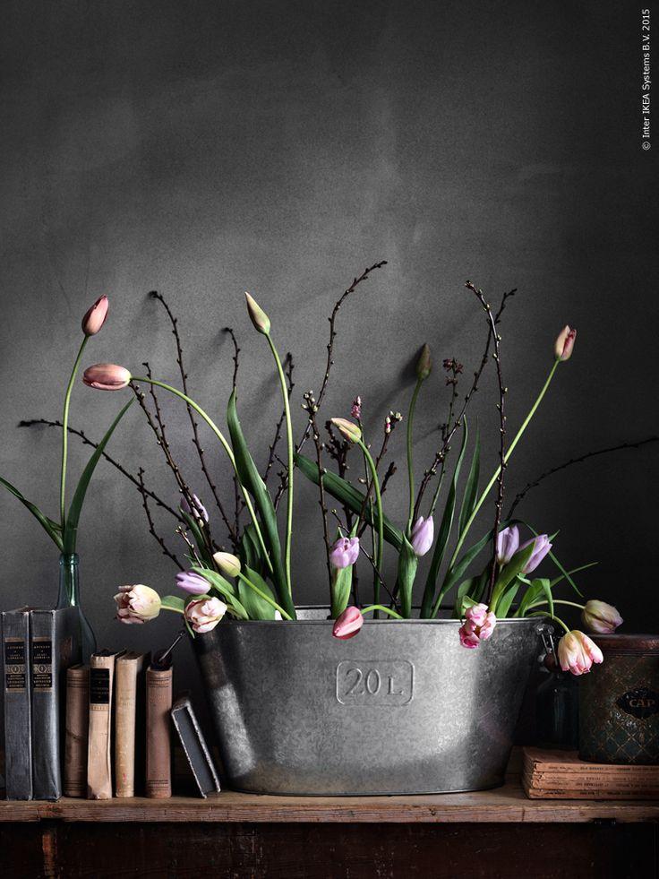 Vårens finaste tuplaner i GRÄSLÖK förzinkad kruka. Krukan funkar lika bra inomhus som utomhus.