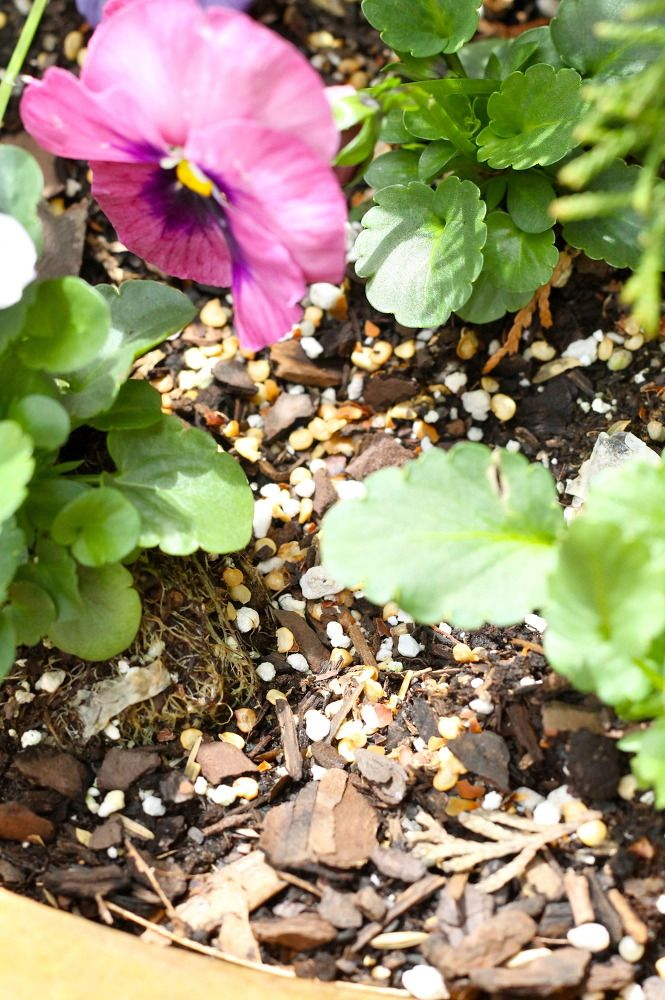 how to keep squirrels out of planters hometalk