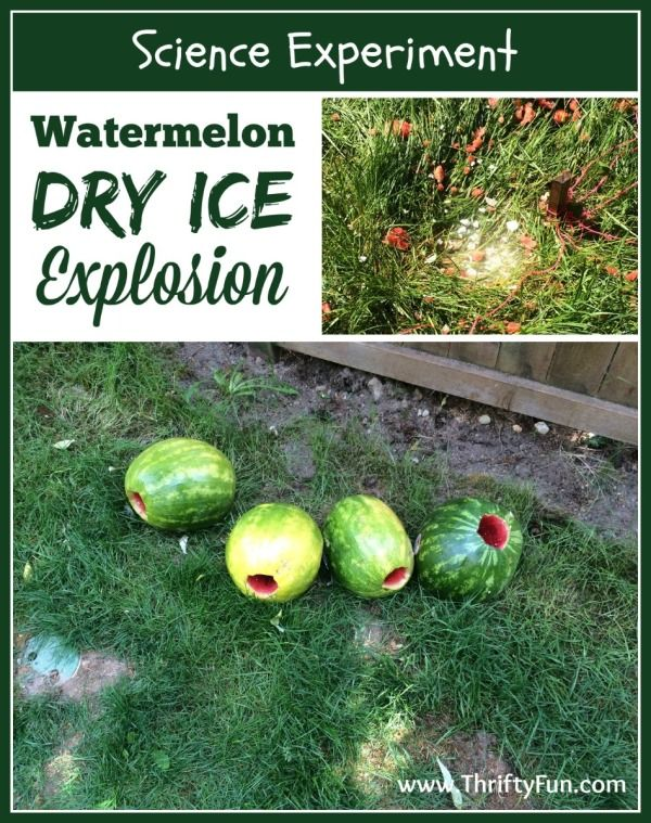 watermelon science project