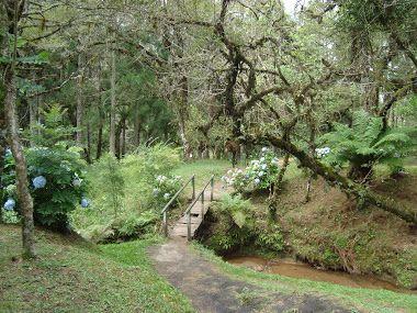 curiosidades-de-monte-verde-bosque-gato-de-botas