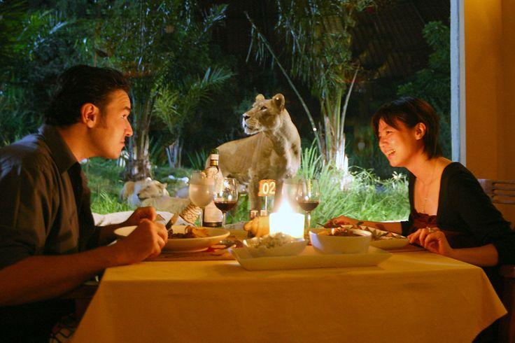 サヴォ ライオン レストラン - バリ島のおすすめグルメ・食事 | 現地を知り尽くしたガイドによる口コミ情報【トラベルコちゃん】