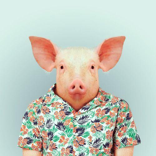 ZOO PORTRAITS by Yago Partal — PIGbyYago PartalforZOO PORTRAITS