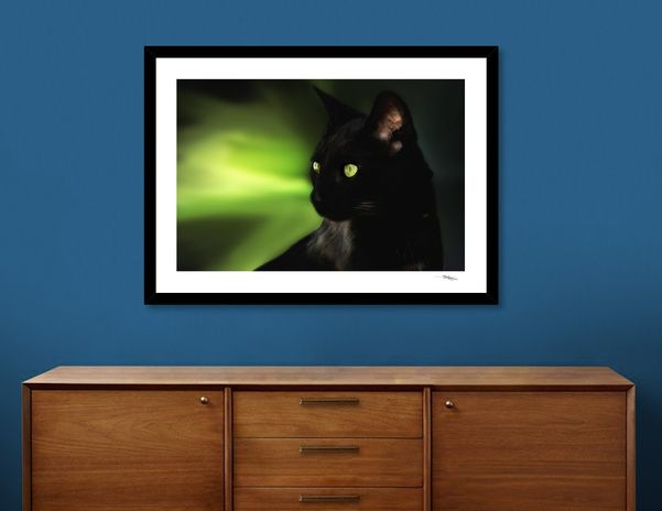 Discover «Black cat», Numbered Edition Fine Art Print by Nannie van der Wal - From 20€ - Curioos