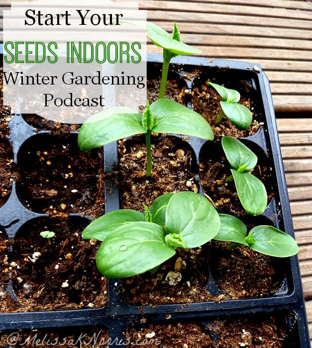 how to grow start seeds indoors